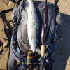 Penn Spinfisher VI